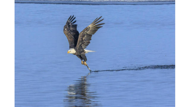 Shot of the Day - eagle_528197
